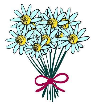 Bouquet of chamomile, illustration, vector on white background.