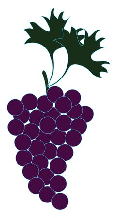 Delicious grapes, illustration, vector on white background.