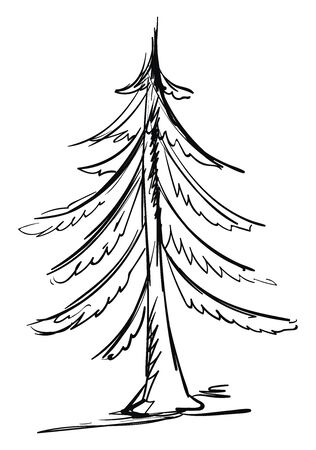 Drawing of spruce, illustration, vector on white background.