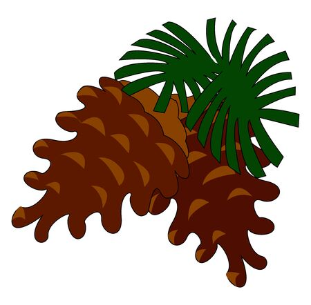 Conifer cone, illustration, vector on white background.