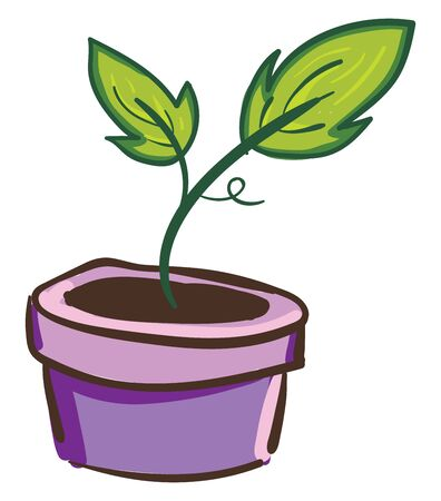 A green plant with leaves in a purple pot, vector, color drawing or illustration.