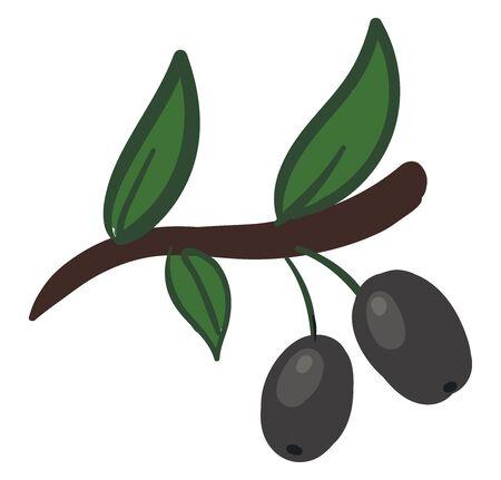Two silver olives, illustration, vector on white background. Ilustração