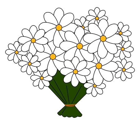 Bouquet of daisies, illustration, vector on white background.
