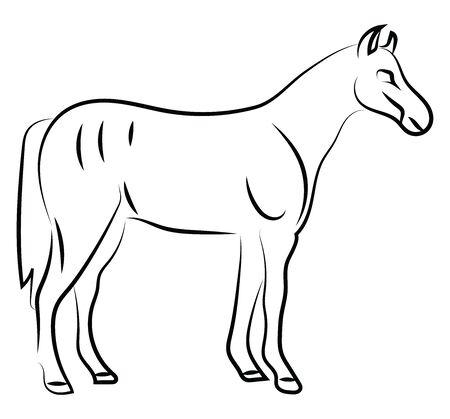 Horse sketch, illustration, vector on white background. Illustration