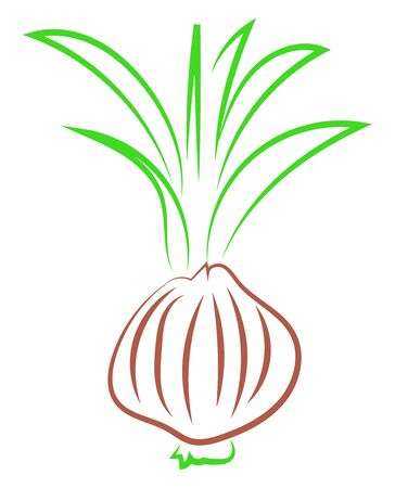 Onions drawing, illustration, vector on white background.