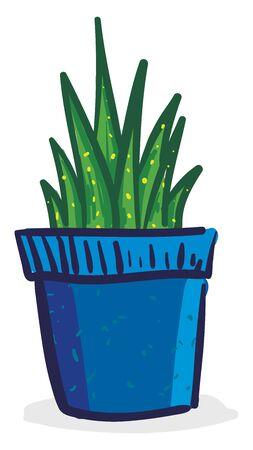 Dark green plant in blue pot, vector, color drawing or illustration. Illustration