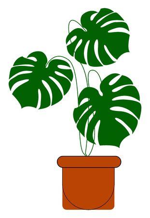 Monstera plant in a pot, illustration, vector on white background. Vektoros illusztráció
