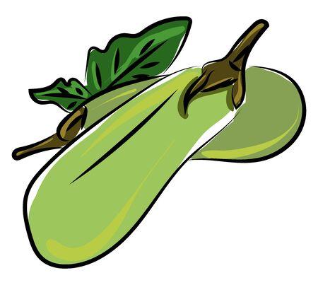 Fresh zucchini, illustration, vector on white background.