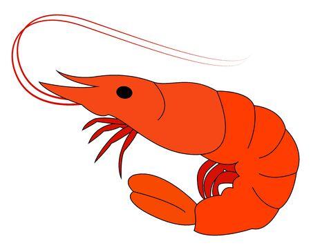 Little shrimp, illustration, vector on white background.