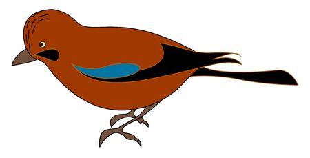 Red jay bird, illustration, vector on white background. Illustration