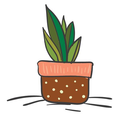 A small saga palm in brown pot, vector, color drawing or illustration.