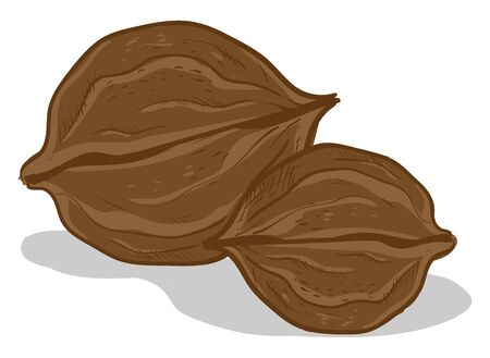 A pair walnuts, illustration, vector on white background.