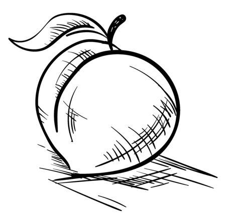 Peach drawing, illustration, vector on white background Ilustração