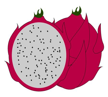 Red pitahaya, illustration, vector on white background. Illustration