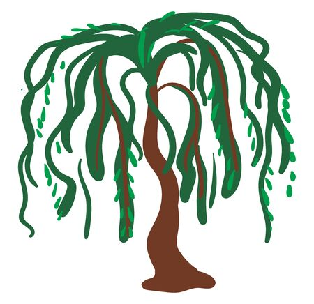Willow tree, illustration, vector on white background.