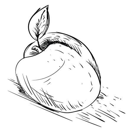 An apricot sketch, illustration, vector on white background. Ilustração