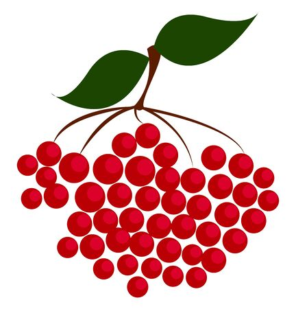 Red berries, illustration, vector on white background.