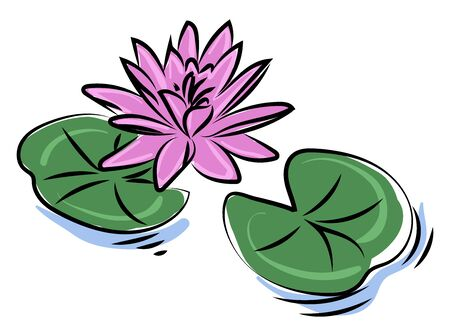Purple lotus flower, illustration, vector on white background.