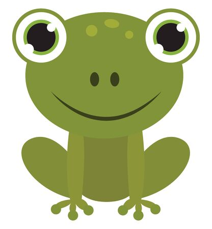 Cute green frog, illustration, vector on white background.