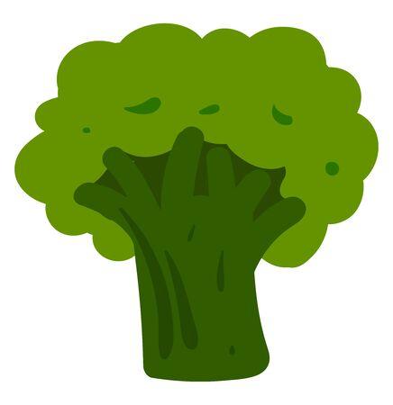 Green broccoli, illustration, vector on white background.