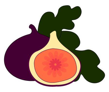 Purple fig, illustration, vector on white background.