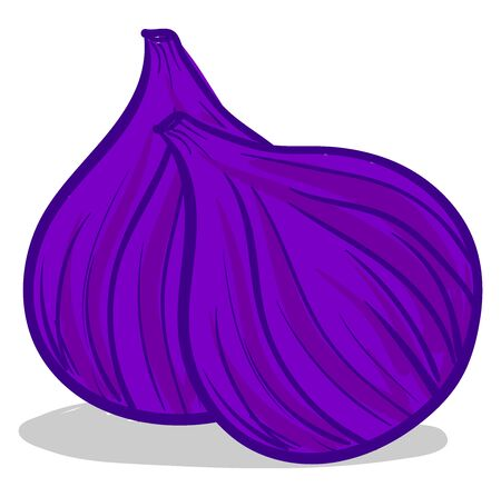 A pair of tasty figs, illustration, vector on white background. Иллюстрация