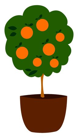 Orange tree in pot, illustration, vector on white background Stok Fotoğraf - 132791146