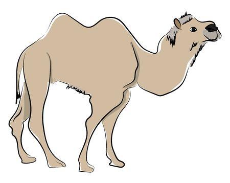 Camel in desert, illustration, vector on white background.