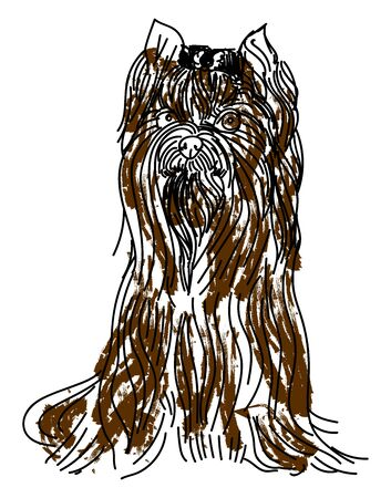 Yorkshire terrier, illustration, vector on white background.