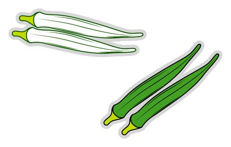 fresh okra, illustration, vector on white background.