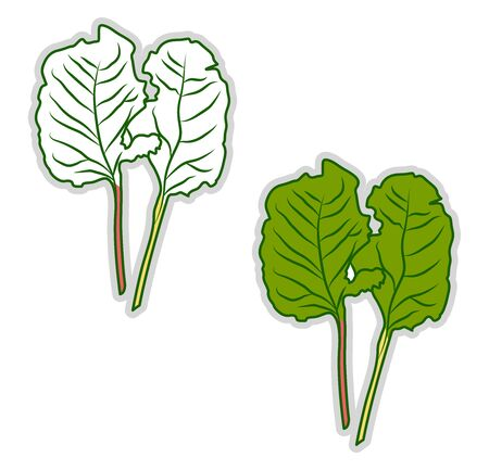 Fresh chard, illustration, vector on white background. Illusztráció