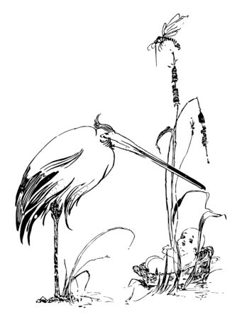 Baby in Basket & Crane with a crane standing over it, vintage line drawing or engraving illustration. Çizim