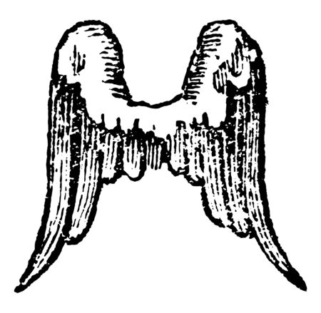 Wings Inverted have the feathers point downwards, vintage line drawing or engraving illustration. 向量圖像