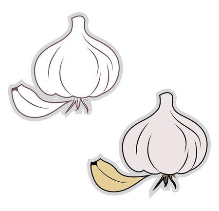 Fresh garlic, illustration, vector on white background. Ilustrace