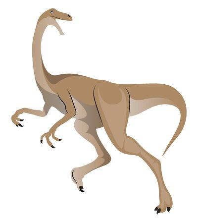 Gallimimus, illustration, vector on white background.