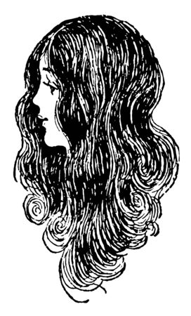 This illustration represents Long Hair of a Female, vintage line drawing or engraving illustration. Ilustracja