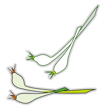 Fresh chives, illustration, vector on white background.