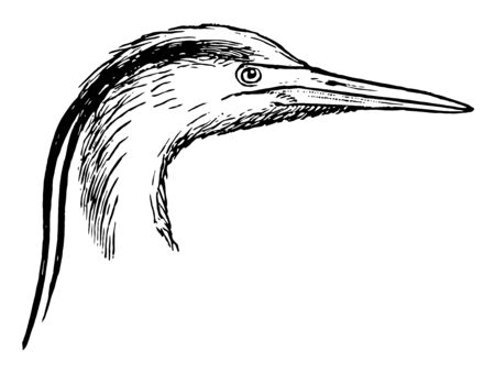 This illustration represents heron Head and Leg, vintage line drawing or engraving illustration.