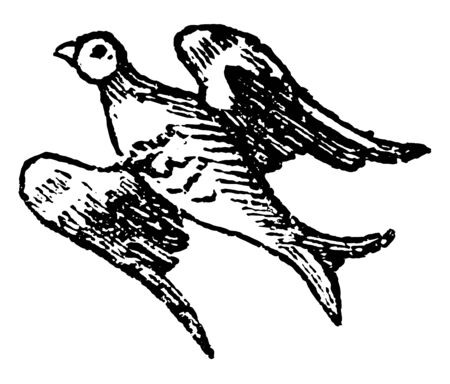 Bird Volant is used in Heraldry to express the same action, vintage line drawing or engraving illustration.