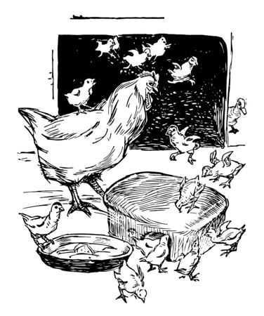 Mother Hen & Baby Chicks eating grain out of a bowl, vintage line drawing or engraving illustration.