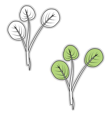 Fresh watercress, illustration, vector on white background.