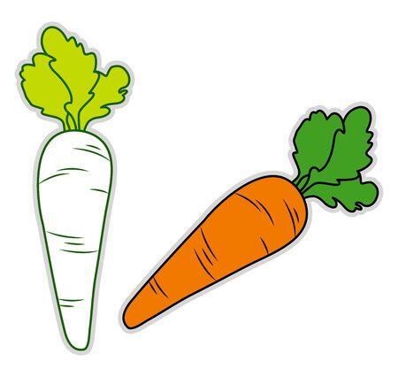 Fresh carrot, illustration, vector on white background.