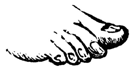 This illustration represents Toes, vintage line drawing or engraving illustration.