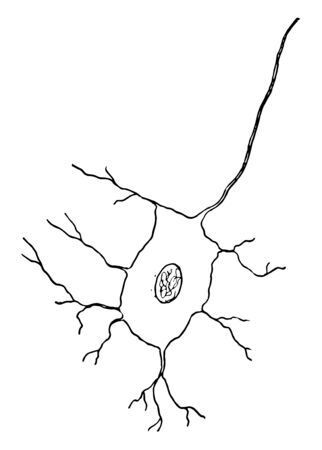 Animal nerve cells are specialized cells called neurons, vintage line drawing or engraving illustration.