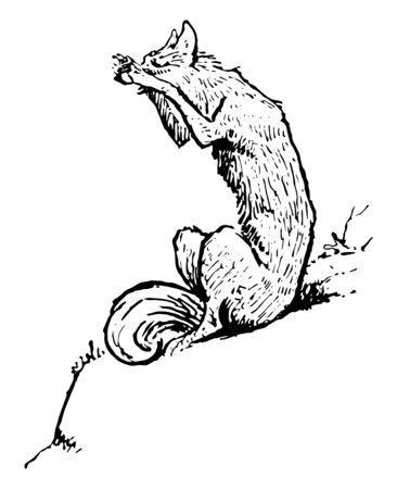 The fox sitting on ground and howling, vintage line drawing or engraving illustration Illustration