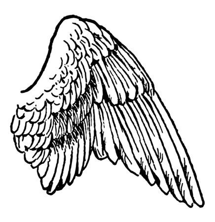 Wing of a Bird which is use to control their flight, vintage line drawing or engraving illustration. Illusztráció