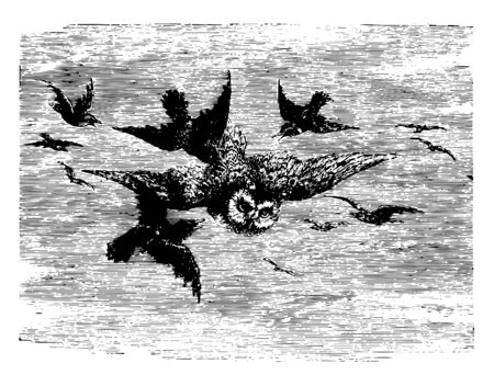 The Mobbing of an Owl when smaller birds in fear vintage line drawing or engraving illustration.