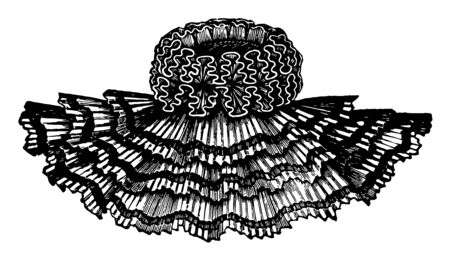 Cape Collar is worn over the cape for decorative reasons, vintage line drawing or engraving illustration.