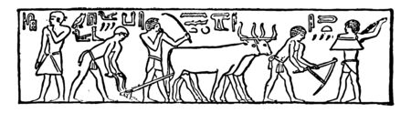 Early Egyptian Pictures or Ancient Egypt pictures Ploughing breaking clods and sowing vintage line drawing or engraving illustration.