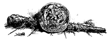 Fallen tree trunk, one rose near by, one round shape tree trunk with design of a man and an animal, vintage line drawing or engraving illustration